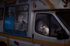Martin Usborne Photographs 14 Lonely Dogs Left Alone in Cars