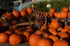 Explore Southport NC near St James Plantation this October for lots of fun events!