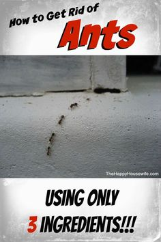 Stop the horror movie!  Learn how easy it is to get rid of ants using only three ingredients when they decide to invade your home!   The Happy Housewife