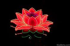 Neon Lotus Flower