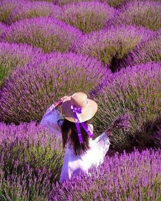 It doesn't matter how old you are, you still have dreams and ideas to share. Lavender Fields, Lavender Flowers, Purple Flowers, Wild Flowers, Purple Haze, Shades Of Purple, Beautiful Flowers, Beautiful Pictures, Mode Glamour