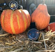 Check out the gorgeous, new Origami Owl Fall + Winter Collections! I love creating personalized jewelry for gifts!
