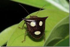 Weird odd strange bizarre amazing rare surprising animals insect creature resemble human face figure pattern (8)