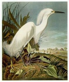 john+james+audubon+images | John James Audubon photos et images