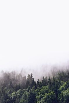 Cloudy forest 2 wallpaper from Happywall wallmurals wallmural wallpapers wallpaper fog happywall 842454674027509859 Foggy Forest, Misty Forest, Forest Mountain, Forest Wallpaper Iphone, Wallpaper Backgrounds, Wall Wallpaper, Forest Poster, Natur Wallpaper, Poster Photo