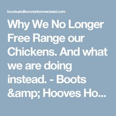 Why We No Longer Free Range our Chickens. And what we are doing instead. - Boots & Hooves Homestead