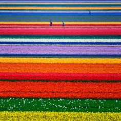 Netherlands Tulip Fields From Above - The most beautiful scenery in the world - Download Free Wallpapers