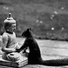 Zen..This makes me smile :)
