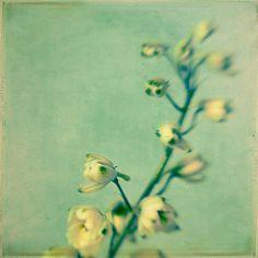 Le printemps | By Irene Suchocki.