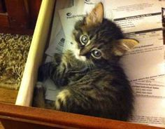 If only you'd find one every time you opened a drawer...