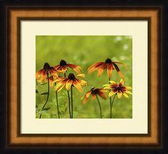 Anna Matveeva Framed Print featuring the photograph Garden Flowers Yellow by Anna Matveeva                           #AnnaMatveeva #Flowers #Sunset #FineArtPhotography #ArtForHome #FineArtPrints