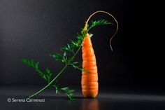 Carrot with leaves.  Part of an on-going project, you can see more on foodfulife.com