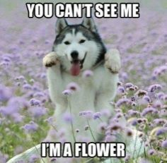 30 Funny animal captions - part funny animal meme, animal pictures with capti. - 30 Funny animal captions – part funny animal meme, animal pictures with captions, funny animal - Funny Animal Quotes, Cute Funny Animals, Funny Cute, Funniest Animals, Dog Quotes, Animal Humor, Super Funny, Animal Antics, Top Funny