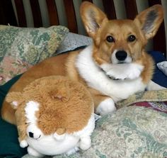 Yes, Ruby is being mocked. But, she does love the squishable.