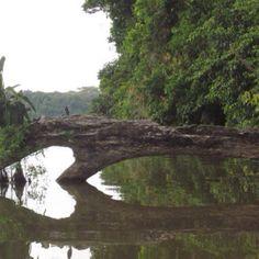Jungle, Puerto Maldonado, Peru