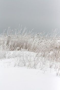 New Ideas Photography Beach Winter Grey Winter Szenen, I Love Winter, Winter White, Winter Christmas, Winter Picture, Coastal Christmas, Winter Colors, Summer Colors, Snow And Ice