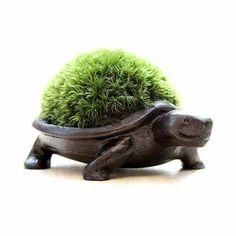 surouweb: / アラハシラガゴケ made of moss bonsai tortoise bronze Moss Garden, Garden Art, Garden Design, Potager Garden, Bonsai Plants, Succulent Pots, Ceramic Planters, Flower Pots, Flowers