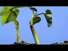 Video crecimiento de una planta.