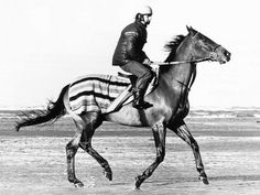 Red Rum trotting it out in a lovely striped blanket #horse #racing