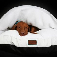 Snuggle Dreamer. Cozy Cave for Dogs
