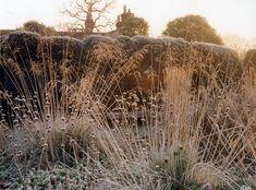 Garden in winter | landscape design: Tom Stuart-Smith