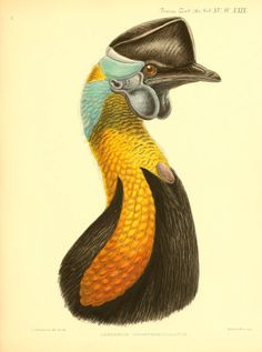 A monograph of the genus Casuarius  London: Zoological Society of London,1900