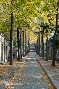 Heather Bullard: Paris Pere Lachaise Cemetery, Autumn Walks, Tree Line, Autumn Scenes, Fall Is Here, Walk This Way, City Living, Stone Paths, Paris Street