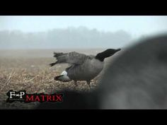 Mastering the goose call STEP 1 by Field Proven Calls - YouTube