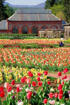 29 best flowers of nc mountains images on pinterest in 2018 nc spring blooms with tulip show at biltmore estate in the walled garden asheville nc mightylinksfo