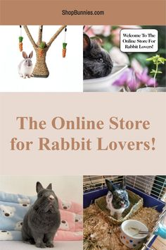 Do you know where to buy rabbit supplies online? Look at our store to find a new treat or toy for your bunny! #bunnies Where To Buy Rabbits, Rabbit Toys, Bunny Rabbit, Cute Baby Bunnies, Cute Babies, Bunny Care, House Rabbit, Canvas Art, Canvas Prints