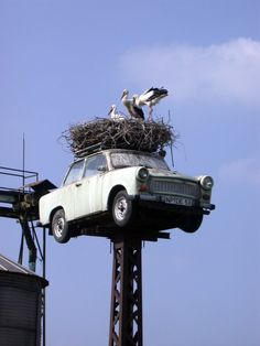 trabbi nest- not able to look through that windshield anymore!