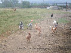 Garcilles Garcilles muches Garcilles: Os presento mis animalitos