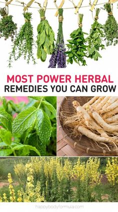 Some of the world's best medicine can be grown in your backyard. In fact, you might already have some in your herb garden.
