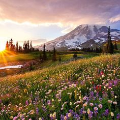 #MountRainier #NationalPark's Paradise area is famous for its glorious views and wildflower meadows. We can definitely see why. Photo by Danny Seidman.