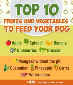 I highly recommend adding these fruits and veggies to your dog's diet as they provide lots of nutritional value! Watermelon Healthy, Dog Bakery, Dog Diet, Healthy Pets, Fruits And Vegetables, Dog Food Recipes, Blueberry, Your Dog, Fun Facts