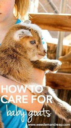 How to Care for Baby Goats Baby Care baby goat care Mini Goats, Cute Goats, Baby Goats, Raising Farm Animals, Raising Goats, Zoo Animals, Cute Animals, Foster Animals, Keeping Goats