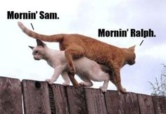 My Cat Daily Normal Life - Mornin' Sam - Mornin' Ralph