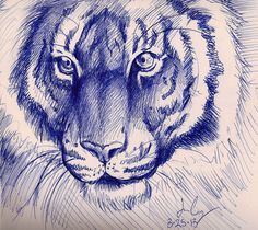 Tiger pen sketch by on DeviantArt Tiger Drawing, Tiger Sketch, Pen Sketch, Biro Art, Ballpoint Pen Drawing, Animal Sketches, Animal Drawings, Pen Drawings, Ballpen Drawing