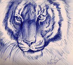 Tiger pen sketch by sketcher216