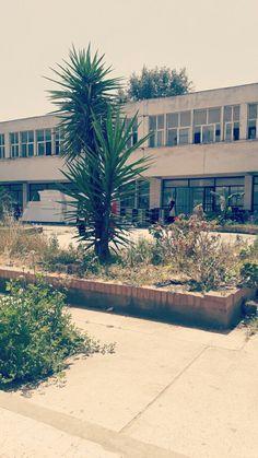Département de biologie  Université de sidi amar  Annaba