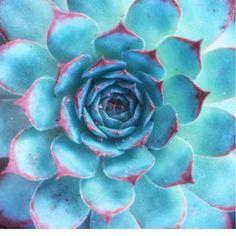 Cactus and Succulent Print Inspo Album!