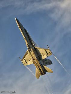 Hornet! by Darek Siusta on 500px