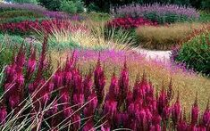 In the Nineties, Holland's most creative gardeners pioneered a 'new perennials' style that swept the world. Click on this photo of Pensthorpe Millenium Garden in Norfolk - (Photo: ALAMY) to read the article in The Telegraph.