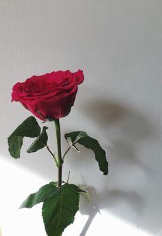 ~ Roses ~
