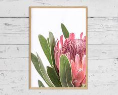 Protea Print, Flower Wall Art, Printable Poster, Digital Download, Australian Native Photography, Pink Flower Decor, Botanical Native Print Protea Art, Protea Flower, Art Floral, Flower Prints, Flower Art, Impressions Botaniques, Extra Large Wall Art, Wall Art Sets, Botanical Illustration