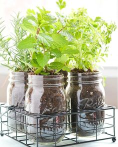 Plant your own indoor herb garden with the help of Ball® Mason Jars. We'd love to see what you're growing!   Captured by Instagram user @nobelrealtors