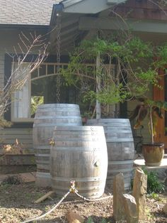 """rainbarrels can also be made from repurposed wine barrels, and the barrels can be """"daisy-chained"""" together to store even more water. add a rainchain instead of a downspout and you have an amazing set up, like these neighbors down the street!"""