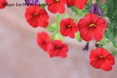 Colors Pretty Pictures, Flower Power, Earth, Colors, Flowers, Plants, Photography, Cute Pics, Photograph