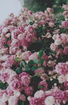 Картинки по запросу flowers tumblr