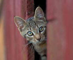 Local groups help transition to TNR for cats on prison campus